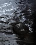 dark water - oil on panel - 50 x 40cm